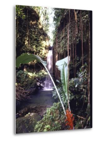 Hanging Liana Vines Frame Waterfall Tumbling Into Emerald Pool