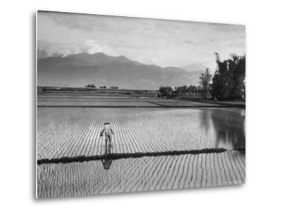 Man Working in Rice Paddies