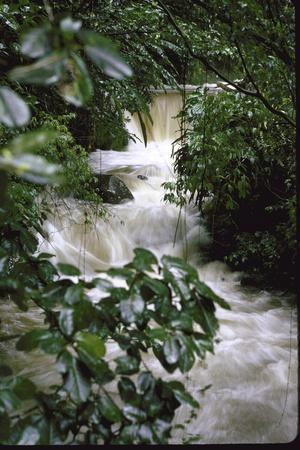 Water Rushing over Stones in Lush Jungle