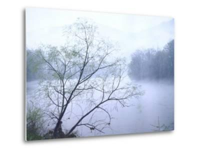 Willow Tree Rising Against Misty Cheat River Just Before Dawn
