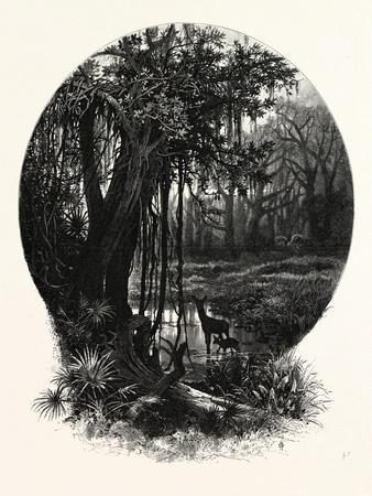 A Hummock, Florida