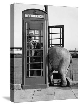 Trunk Call by John Drysdale