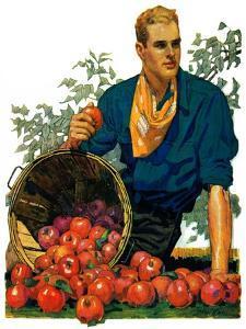 """Bushel of Apples,""November 14, 1931 by John E. Sheridan"