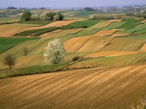 Agricultural Fields on Farm by John Eastcott & Yva Momatiuk