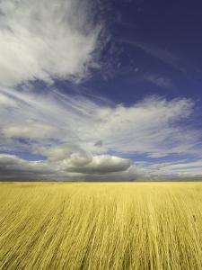 Cumulus Clouds Above Wetland Grasses in Klamath Basin National Wildlife Refuge by John Eastcott & Yva Momatiuk