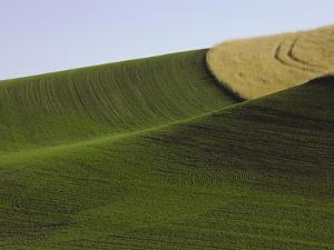 Green and yellow wheat fields in the Palouse Hills of Washington by John Eastcott & Yva Momatiuk