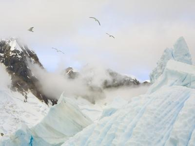Gulls Flying Above Stranded Icebergs at Boothe Island
