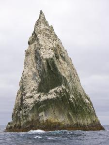 Imperial Shags Nesting on Rocky Pyramid of Shag Rocks by John Eastcott & Yva Momatiuk