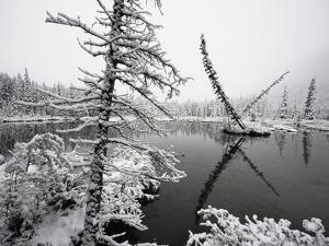Pond and Forest in Winter by John Eastcott & Yva Momatiuk