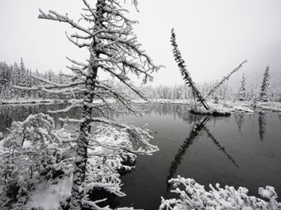 Pond and Forest in Winter by John Eastcott & Yva Momatiuk