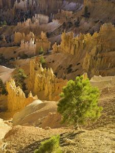 Sandstone hoodoos seen from Sunset Point in Bryce Canyon National Park by John Eastcott & Yva Momatiuk