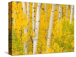 Trees and Autumn Foliage by John Eastcott & Yva Momatiuk