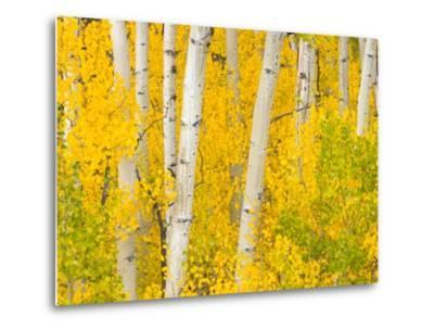 Trees and Autumn Foliage
