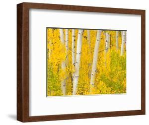 Trees and Autumn Foliage by John Eastcott & Yva Momatiuk