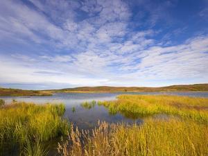 Tundra Marsh by John Eastcott & Yva Momatiuk