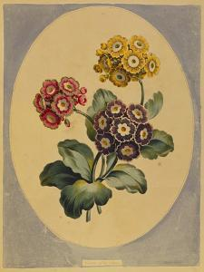 A Collection of Flowers Drawn after Nature and Disposed in an Ornamental and Picturesque Manner by John Edwards