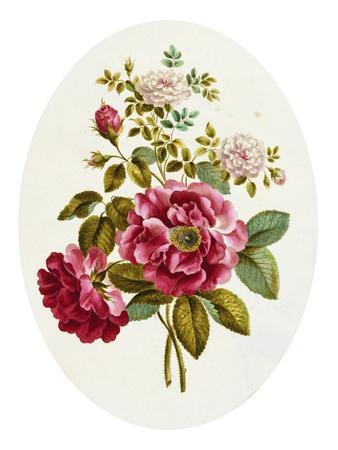 Damask Rose, Collection of Flowers Drawn and Disposed in an Ornamental and Picturesque Manner