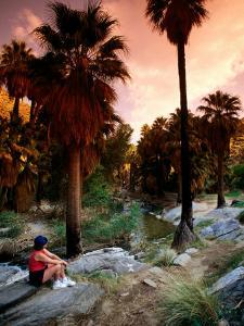 Agua Caliente Indian Reserve Palm Canyon, Upper Canyon, Palm Springs, California by John Elk III