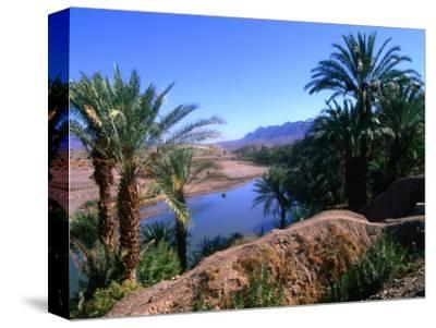 Date Palms in the Draa Valley, Draa Valley, Ouarzazate, Morocco