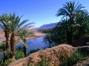 Date Palms in the Draa Valley, Draa Valley, Ouarzazate, Morocco by John Elk III