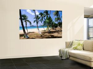 Palm Trees Facing Beach by John Elk III