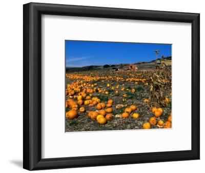 Pumpkin Patch Beside Highway 1, San Mateo County, USA