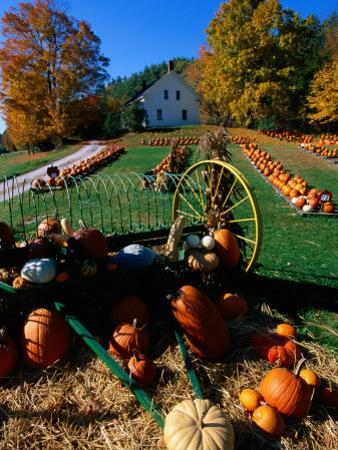 Pumpkin Patch Store, Pownal, Vermont by John Elk III