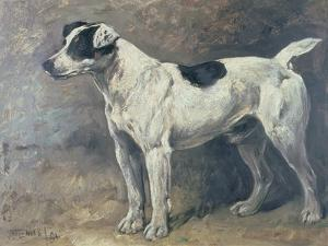 A Jack Russell, 1891 by John Emms