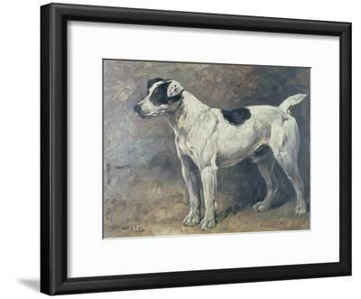 A Jack Russell, 1891