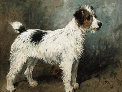 A Portrait of Nettle, a Terrier