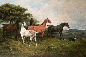 Mares and Foal with a Sheepdog by John Emms
