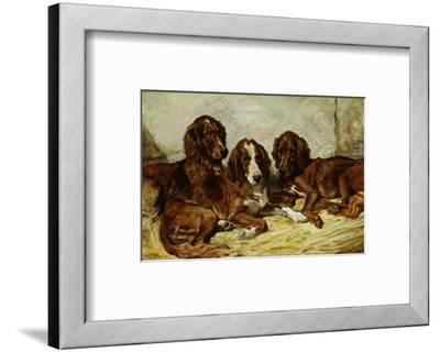 Shot and His Friends, Three Irish Red and White Setters, 1876