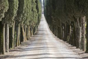 Europe, Italy, Tuscany, Tree Lined Road by John Ford