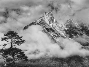 Nepal, Himalayas Mountain and Tree by John Ford