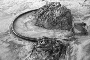 USA, Oregon, Bandon Beach, Seaweed by John Ford