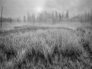 USA, Wyoming, Yellowstone, Cold Foggy Morning by John Ford