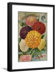 John Gardiner and Co. 1896: Dahlias