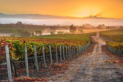 Vineyard Sunrise