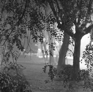 Nightshoot of Park with Trees, London, c.1940 by John Gay