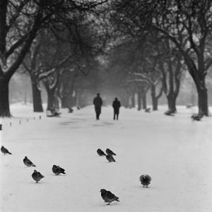 Regent's Park, London. Pigeons on a Snowy Path with People Walking Away Through an Avenue of Trees by John Gay