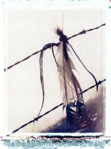 Feather and Hair Suspended on Barbed Wire by John Glembin