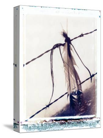 Feather and Hair Suspended on Barbed Wire