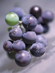 Grapes, Long Island, New York by John Glembin