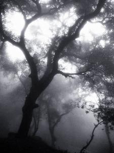 Mist Filled Forest by John Glembin