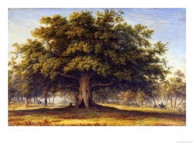 The Beggars Oak