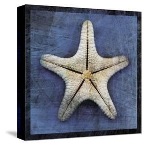 Armored Starfish Underside by John Golden