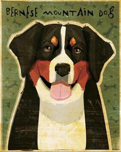 Bernese Mountain Dog by John Golden