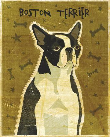 john-golden-boston-terrier