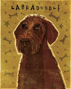 Chocolate Labradoodle by John Golden