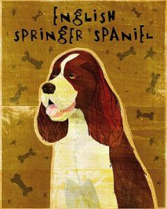 English Springer Spaniel by John Golden
